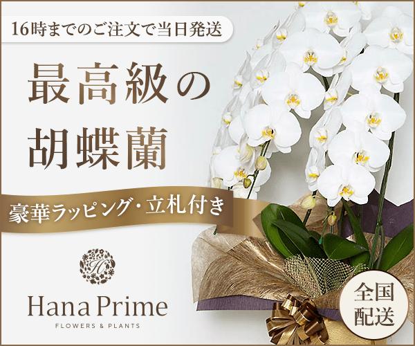 関東・関西エリアは自社配送、当日配送で胡蝶蘭をお届けする事が可能